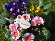 Primrose, Bluebell & Snowdrop Lodge await you!